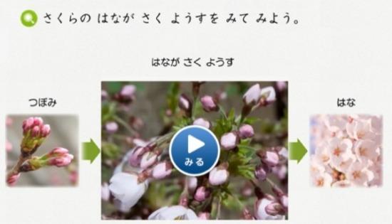 スマイルゼミ幼児自然の動画